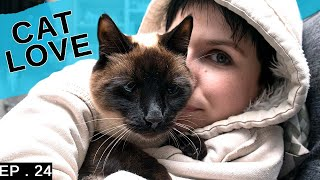 Siamese cat relationships