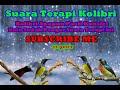 Kolibri Apapun Pasti Konslet Klo Dengar Suara Terapi Ini  Mp3 - Mp4 Download