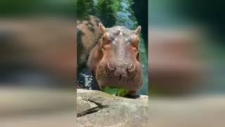 Какие же они забавные Подборка смешных и милых моментов с животными Animals Video Compilation 107