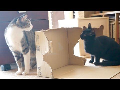 猫アタック失敗と成功