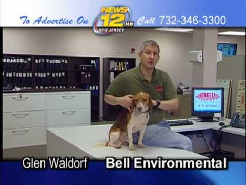 Roscoe the Bed Bug Dog & Bell Environmental for News12 ...