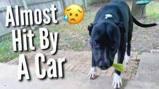 We Rescued A Dog | Teen Mom Vlog