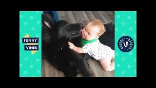 TRY NOT TO LAUGH - Funniest Animals & Cute Pets Compilation   Funny Vines July 2018