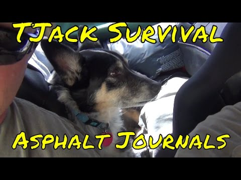 Road Triping With Mark Jinx the Dog and the Asphalt Journals