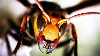видео гусеница мохнатая фото