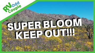 Super Bloom & Joshua Tree KEEP OUT!!! (Why we RV Full Time!)