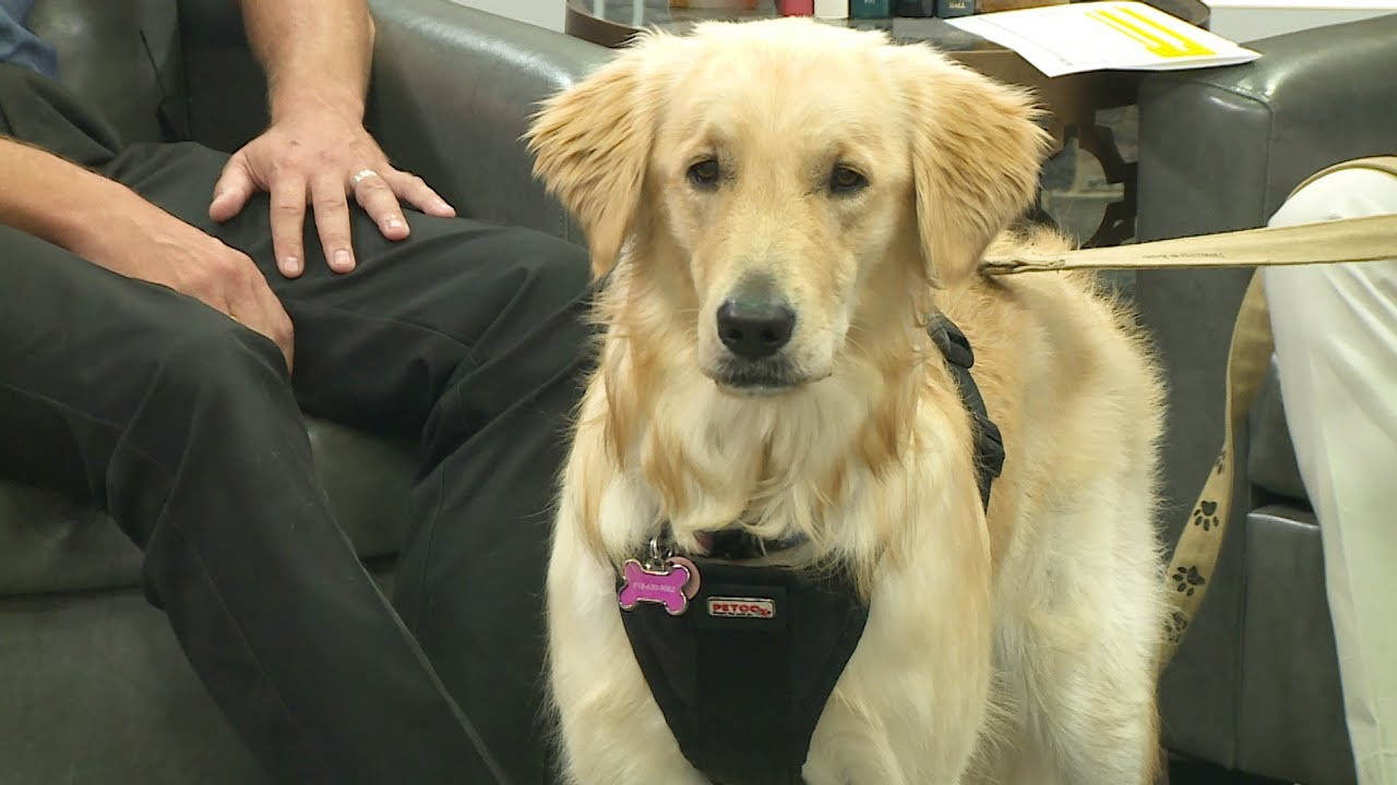 Ask Arlington: Special Needs Pets Info from Animal Services