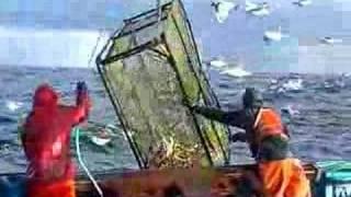 Repeat youtube video King Crabbin'