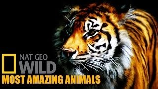 Nat Geo Wild Documentaries full Most Amazing Animals 2015 Part 5