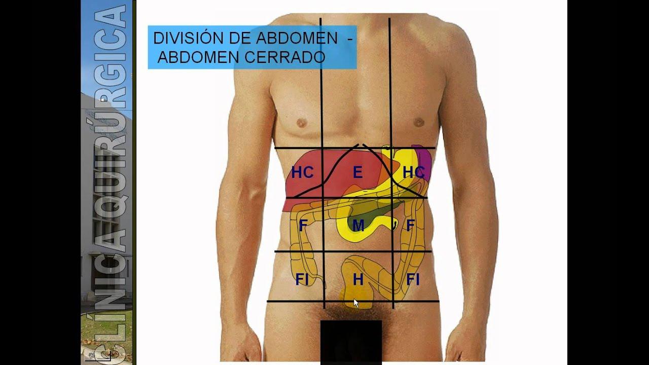 DIVISIÓN TOPOGRÁFICA DE ABDOMEN.avi - YouTube