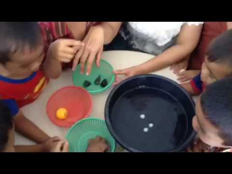 โครงงานทางวิทยาศาสตร์สำหรับเด็กปฐมวัย เรื่อง วัตถุจมน้ำ/ลอยน้ำ