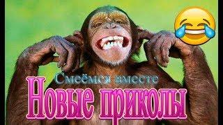✅№48 Смешные обезьяны Приколы про обезьян  #Смеёмся вместе