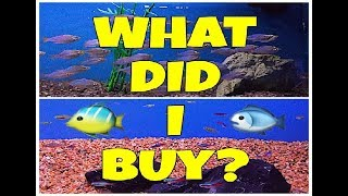 SHOPPING FOR NEW FISH!!!! WHAT DID I BUY????