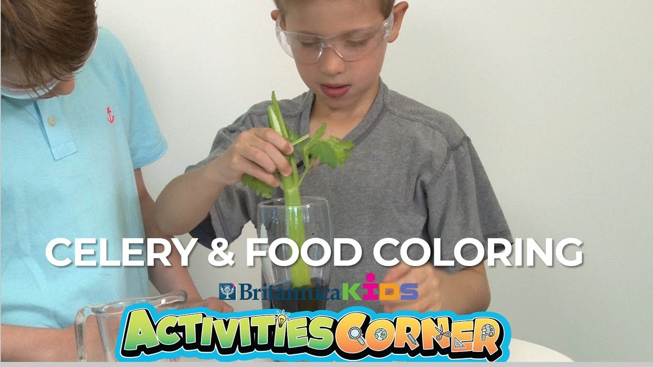 ACTIVITIES CORNER: Celery \u0026 Food Coloring Experiment   Britannica Kids -  YouTube [ 720 x 1280 Pixel ]