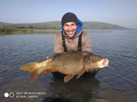#карптрофей#рыбалка#флет Ловля дикого