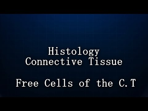 Histology : Doctor Doha : Free Cells of the Connective Tissue