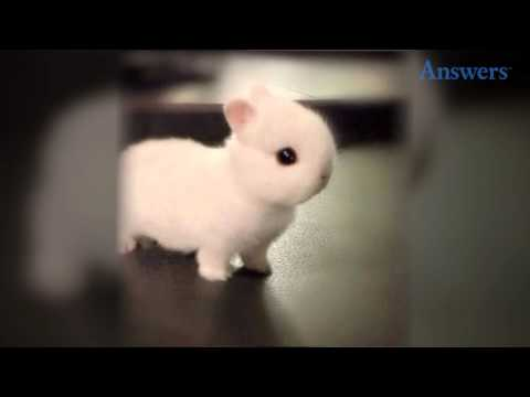 how-adorable-is-this-little-baby-bunny?-he's-so-tiny-and-cute-he-doesn't-even-look-real!