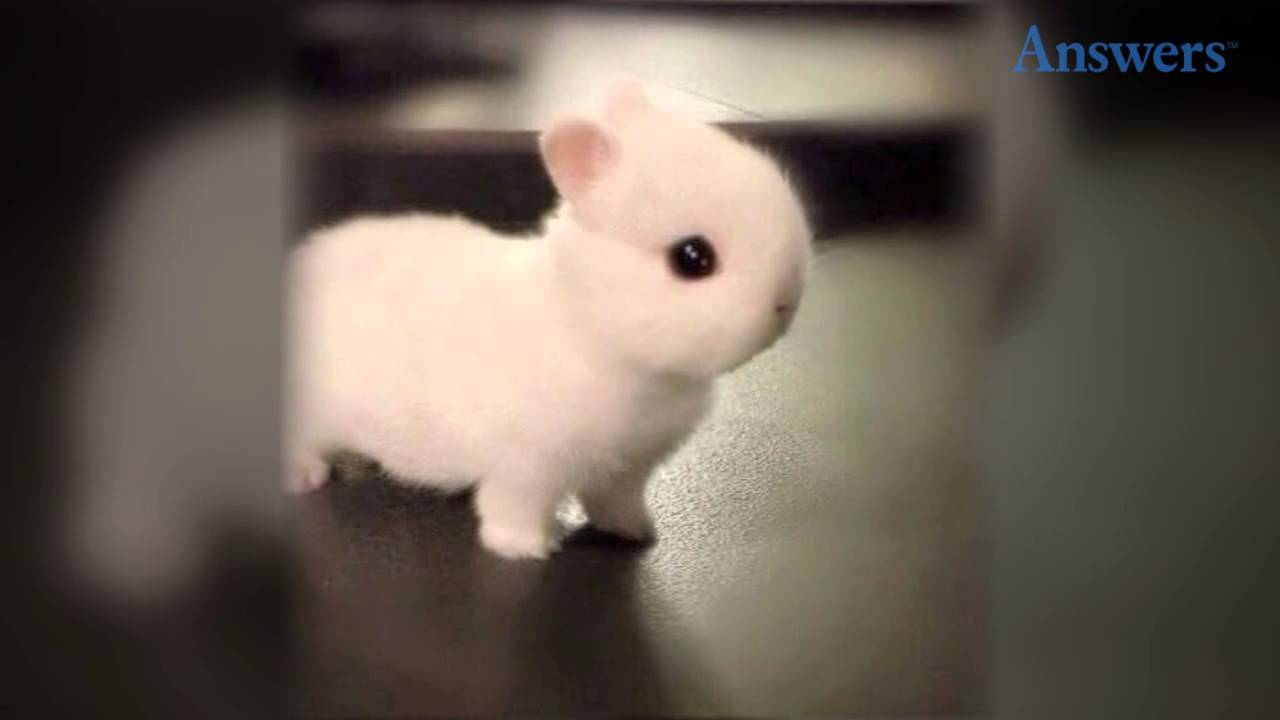 how adorable is this little baby bunny? he's so tiny and cute he