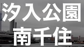 20180225汐入公園の野鳥(NikonP900)イソヒヨドリ!、ユリカモメ、セグロカモメ、オナガガモ、ヒドリガモ、コガモ、オオバン、スズメ、ホシハジロ、キンクロハジロ thumbnail
