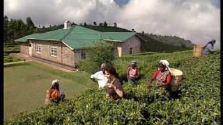 Tea Farm, Sri Lanka by Asiatravel.com