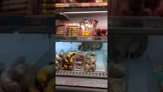 Кот ест колбасу в магазине.