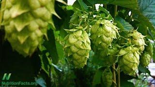 Jaké jsou účinky fytoestrogenu z chmele v pivu?