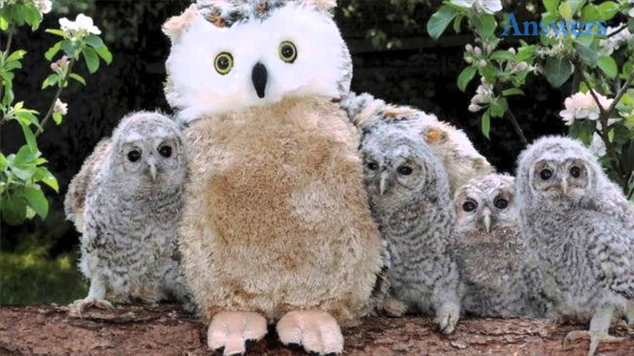 These Poor Baby Owls Lost Their Mother So Their Rescuers Gave Them