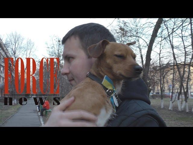 Пёс-ветеран