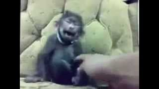 Прикол с обезьяной.
