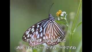 昭和52年発売 **** 今日は肩の凝らないこんな曲を選んでみました(^^♪ 泉ピン子さんの「哀恋蝶」です(^^)b.