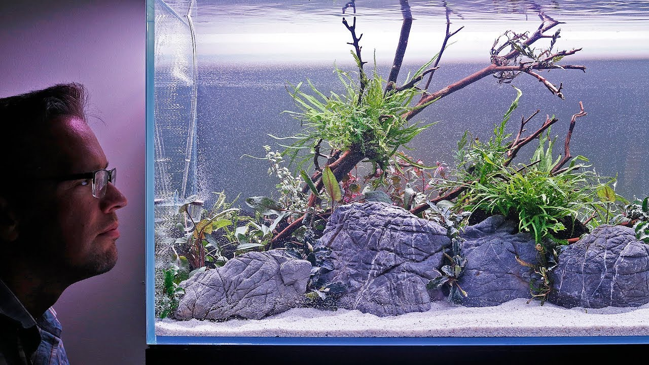 Aquascape Tutorial - Inspired by Filipe Oliveira - YouTube