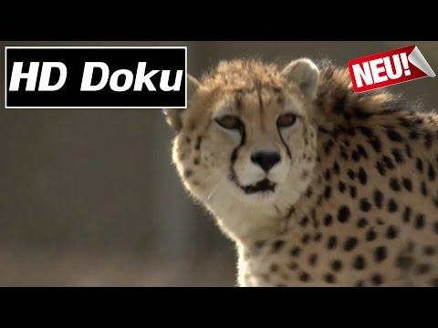 Doku 2017 - Phantome der Wüste: Asiens letzte Geparde - HD/HQ