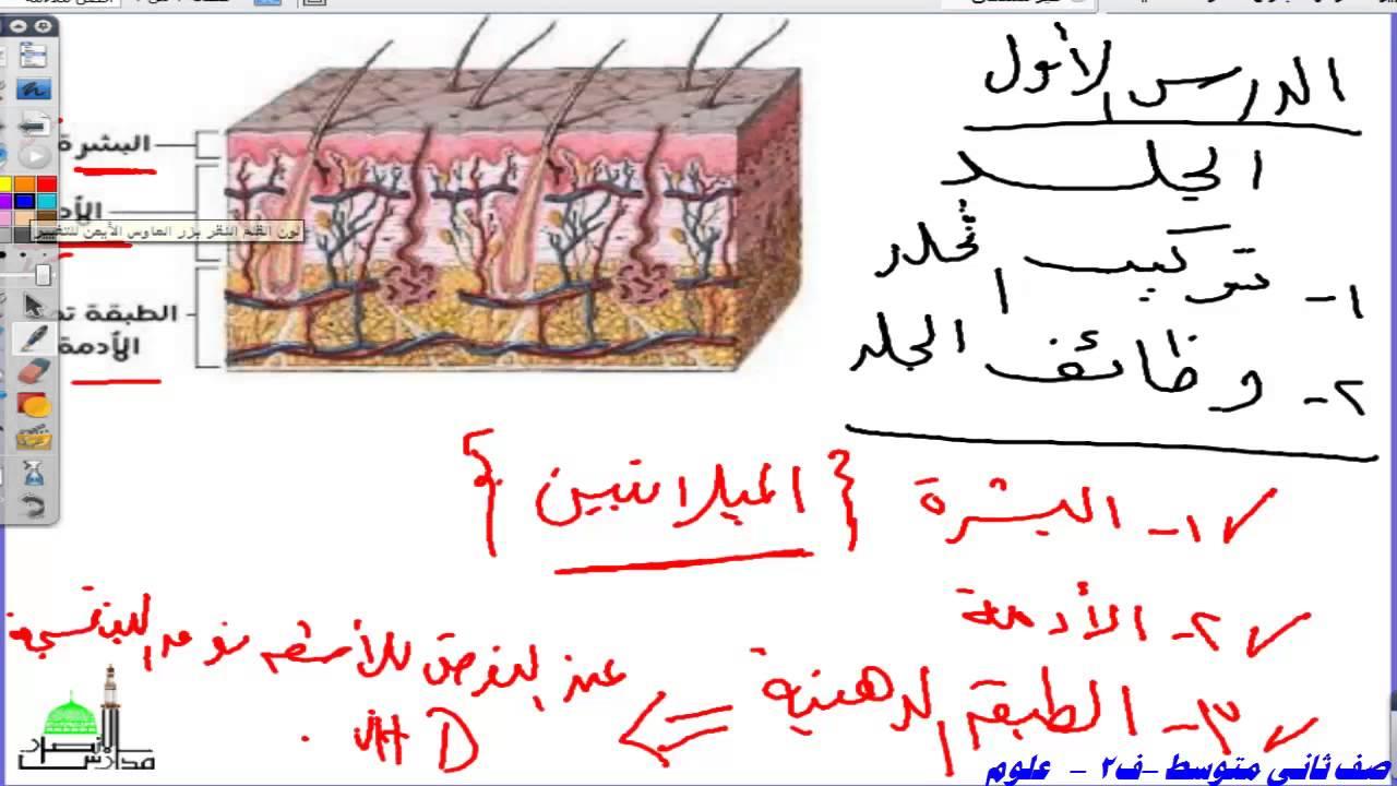 حل كتاب العلوم ثاني متوسط ف2 الجلد والعضلات