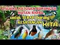 Suara Ratusan Burung Di Hutan Rimba Untuk Terapi Burung Kesayangan Anda  Mp3 - Mp4 Download