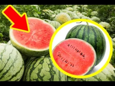 You Should Never Ever Eat Watermelons Like This, Absolutely NEVER