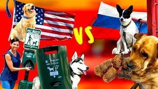 Чем в США отличаются законы содержания собак от российских
