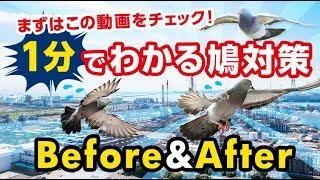 株式会社プロテクトは、日本全国対応 鳩対策15000件の実績で安心安全の...