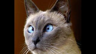Смешные кошки 4 ● Приколы с животными лето 2014 ● Funny cats vine compilation ● Part 4