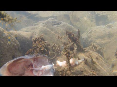 Они всегда приходят. Креветки и крабы. Черное море.