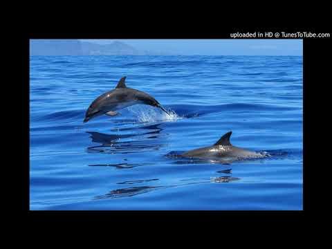 Dolphin-Tears mp3
