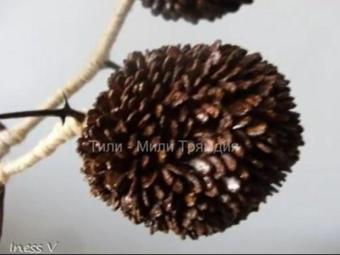 Поделки из арбузных семечек и пластилина - Юлия 39