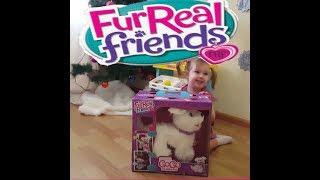 FurReal Friends Hasbro Интерактивная игрушка- щенок GoGo .Каролина играет с интерактивной собакой