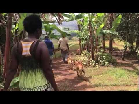 Grenada Organic Agricultural Movement
