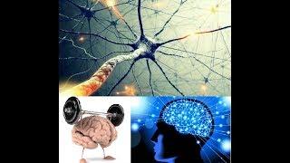 Бодитюнинг. День 17.0.  Мышечная память. Роль мозга и нейронов в развитии силы и массы мышц.