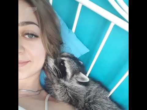 Cuddly raccoon