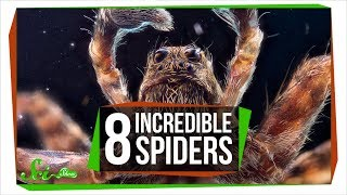 8 Awe-Inspiring Spiders