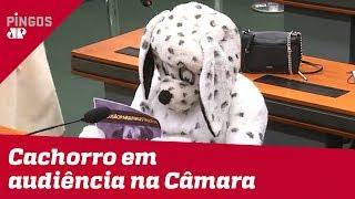 Cachorro de pelúcia participa de audiência na Câmara