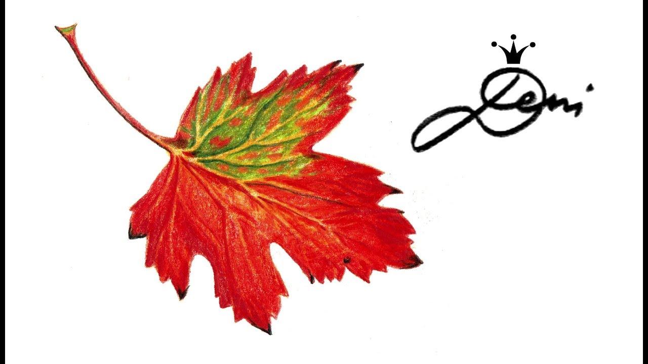 Herbstblatt Zeichnen Teil 1 How To Draw An Autumn Leaf