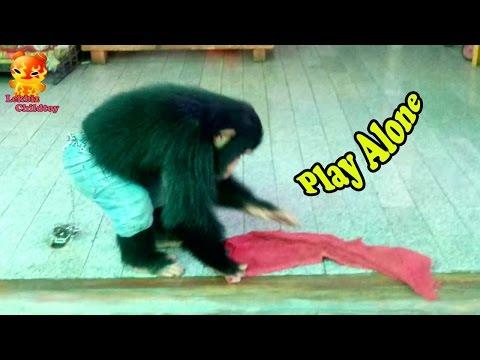 Who Does Not Love .....Play Alone @Samutprakarn Zoo