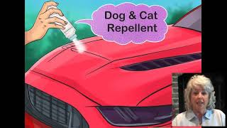This is EXACTLY H๐w to Keep Cats Off Cars #cats #cars